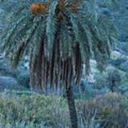 Palm Tree  Almanzora Mountain Spain  Poster