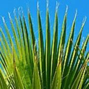 Palm Tree And Blue Sky 2/06 Poster