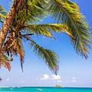 Palm Tree And Caribbean Poster