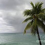 Palm Tree And Ocean Poster