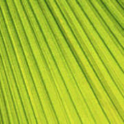 Palm Tree Leaf Abstract Poster