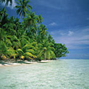 Palm Tree Lined Beach Papua New Guinea Poster