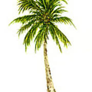 Palm Tree Number 4 Poster