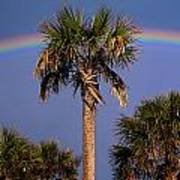 Palm Tree Rainbow Poster