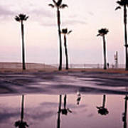 Palm Tree Reflections Poster