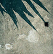 Palm Tree Shadow On Wall With Holes Poster