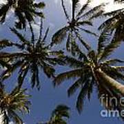 Palm Trees 3 Poster