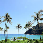 Palm Trees Along The Coast Of Waimanalo Poster