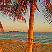 Palm Trees By A Restaurant On The Beach In Bahia Kino-sonora-mexico Poster