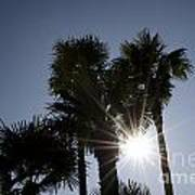 Palm Trees In Backlit Poster