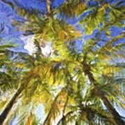Palm Trees Of Aruba Poster