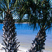 Palm Trees Of Gulf Breeze Poster
