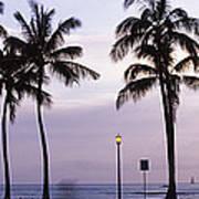 Palm Trees On The Beach, Waikiki Poster