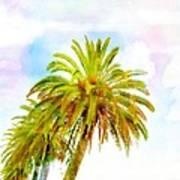 Palmed Colours Poster