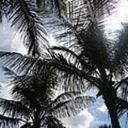 Palms In Stuart Poster