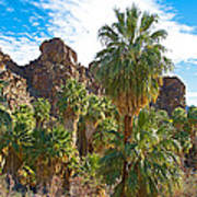 Palms Stand Tall In Andreas Canyon In Indian Canyons-ca Poster