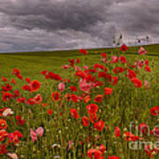 Palouse Poppies Poster
