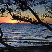 Pamlico Sound Through The Trees Poster
