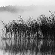 Pampas Grass In Fog Poster