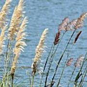 Pampas On The Lake Poster