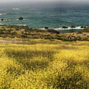 Panarama Spring On Califronia Coast By Denise Dube Poster