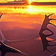 Panorama Caribou Antlers Whitefish Lake Nwt Canada Poster