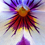 Pansy Abstract 1 Poster
