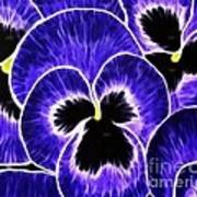 Pansy Expressive Brushstrokes Poster