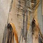 Paper Bark Poster