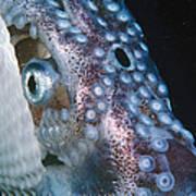 Paper Nautilus Port Phillip Bay Poster