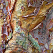 Paperbark Abstract Poster