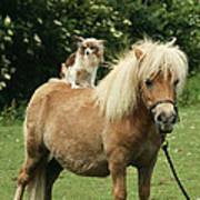 Papillon Riding Shetland Pony Poster