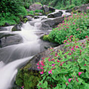 Paradise River And Spring Wildflowers Poster