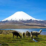 Parinacota Volcano Lake Chungara Chile Poster