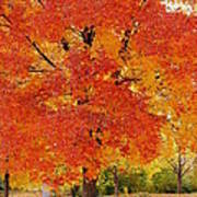 Park In Fall Poster by Yoshiko Wootten