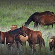 Parker Ranch Horses Poster