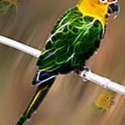 Parrot Beauty Digital Artwork Poster
