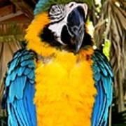 Parrot II Poster