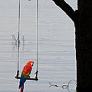 Parrot On A Swing Poster