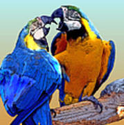 Parrot Passion 2 Poster by Linda  Parker