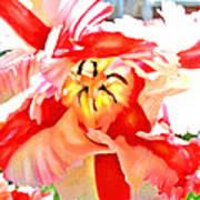 Parrot Tulip Poster