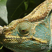 Parsons Chameleon From Madagascar 12 Poster