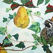 Partridge And  Pears  Poster