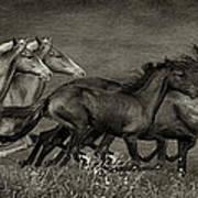 Paso Peruvian Horses On The Run Poster