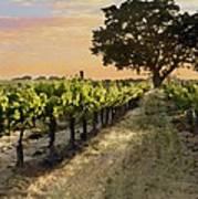 Paso Vineyard  Poster