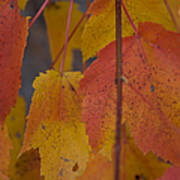 Pastel Colors Of Autumn Poster