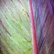 Pastel Leaf Detail Poster
