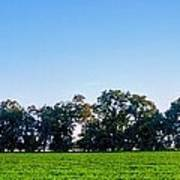Pasture Tree Line Summer 15798 Poster