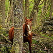 Patagonian Packhorse Poster