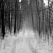 Path In A Forest Poster
